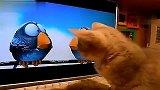 猫咪看的到吃不到啊,7gyy.com心如刀绞啊