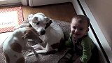 小宝宝没事去撩狗狗,结果被两只汪按住狂舔,洗脸带刷牙全套服务