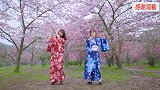 东京夏日相会带你看武汉东湖满园樱花
