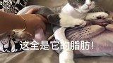 本以为猫咪生病了,去医院检查完就尴尬了