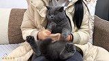 用猫咪的脸,给老公手机设置面容ID,它可以识别猫脸吗?